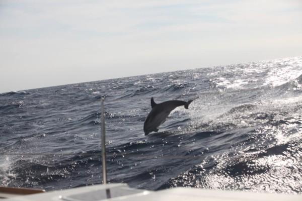 Delfin Segeln Balearen Katamaran